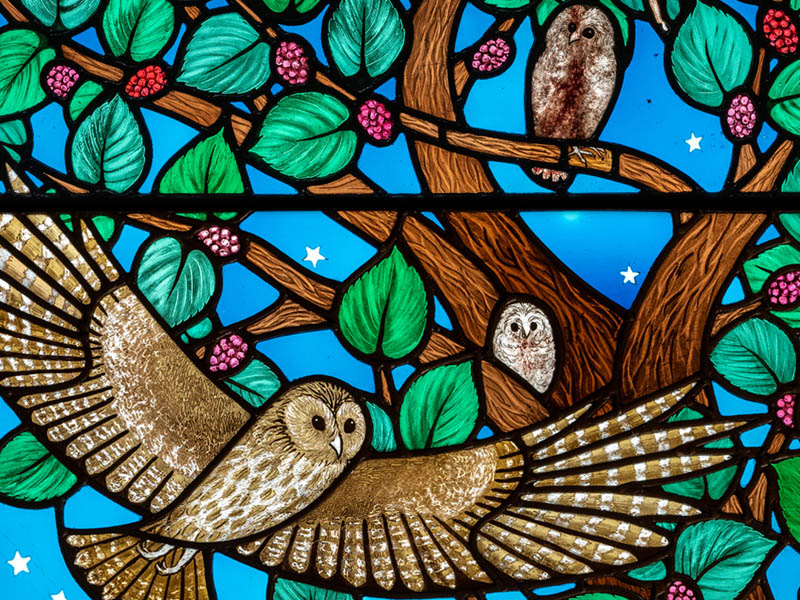 Highgate Owls 2020